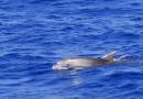 Dolfijnen spotten op Ibiza, een uniek en magisch moment!